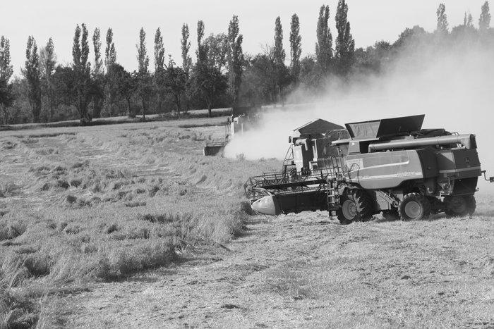 Výnosy pšenice, ječmene ařepky vhospodářském roce 2016-2017